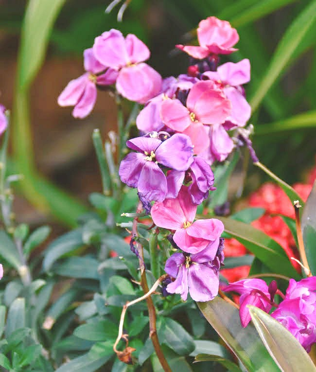 f:id:flowerTDR:20210326080317j:image