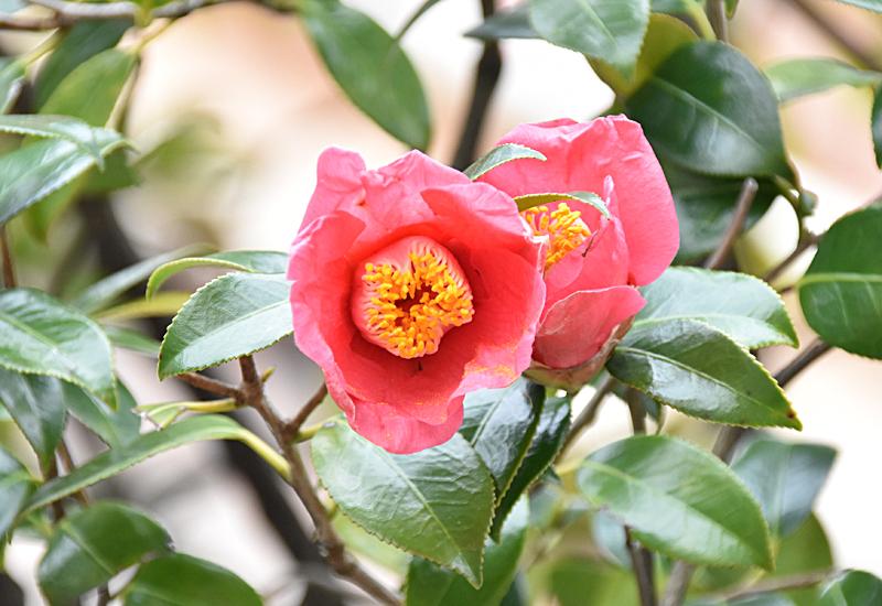 f:id:flowerTDR:20210401082232j:plain