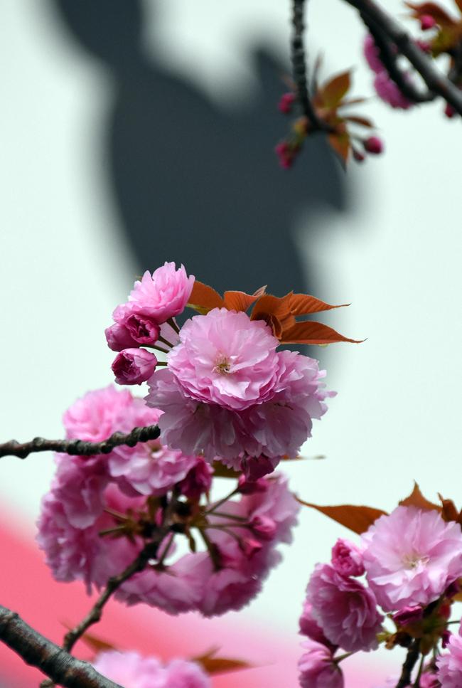 f:id:flowerTDR:20210403084806j:plain