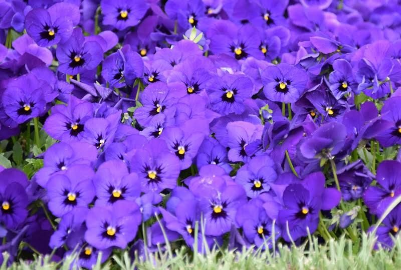 f:id:flowerTDR:20210404084503j:image