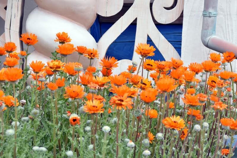 f:id:flowerTDR:20210404084514j:image