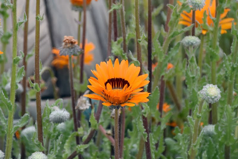 f:id:flowerTDR:20210404084521j:image