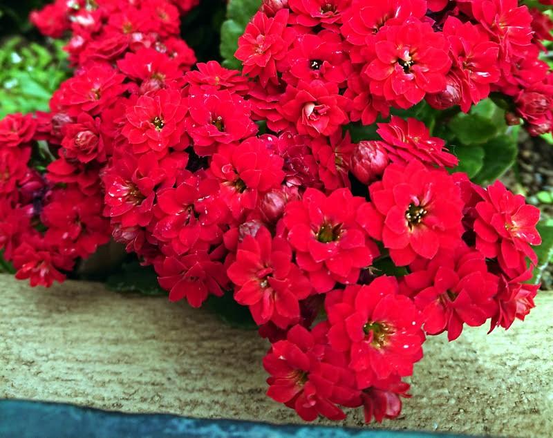 f:id:flowerTDR:20210405070910j:image