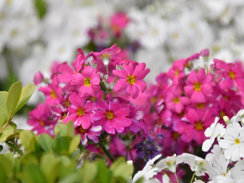 f:id:flowerTDR:20210406085526j:image