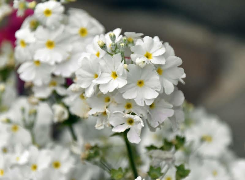 f:id:flowerTDR:20210406085537j:image