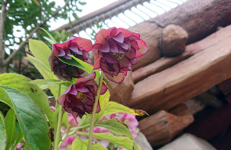 f:id:flowerTDR:20210407080238j:plain
