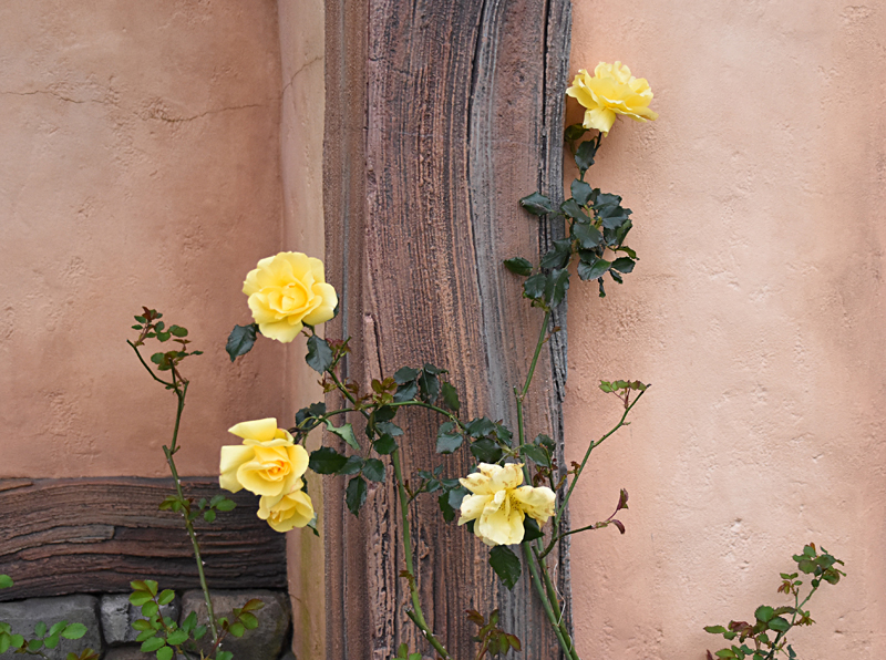 f:id:flowerTDR:20210410103903j:plain