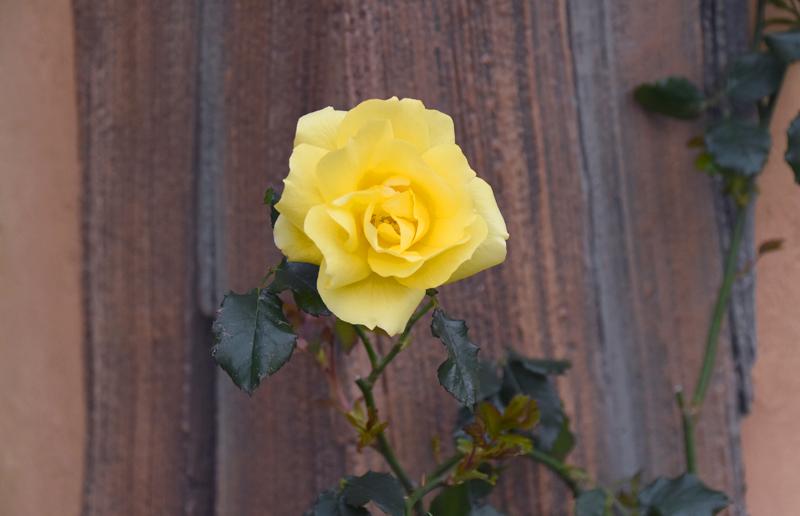 f:id:flowerTDR:20210410103915j:plain