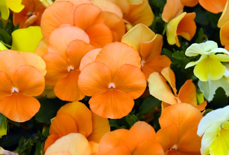 f:id:flowerTDR:20210411083616j:plain