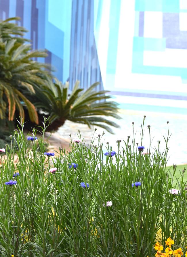 f:id:flowerTDR:20210413223514j:plain
