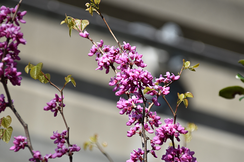 f:id:flowerTDR:20210416093304j:plain