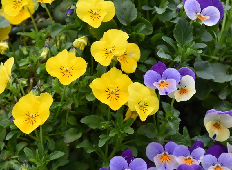 f:id:flowerTDR:20210417085326j:plain