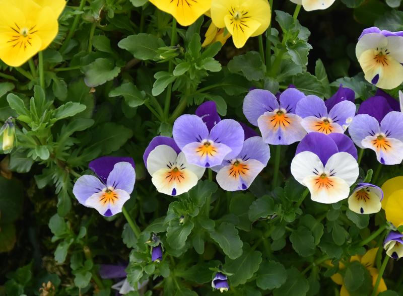 f:id:flowerTDR:20210417085935j:plain