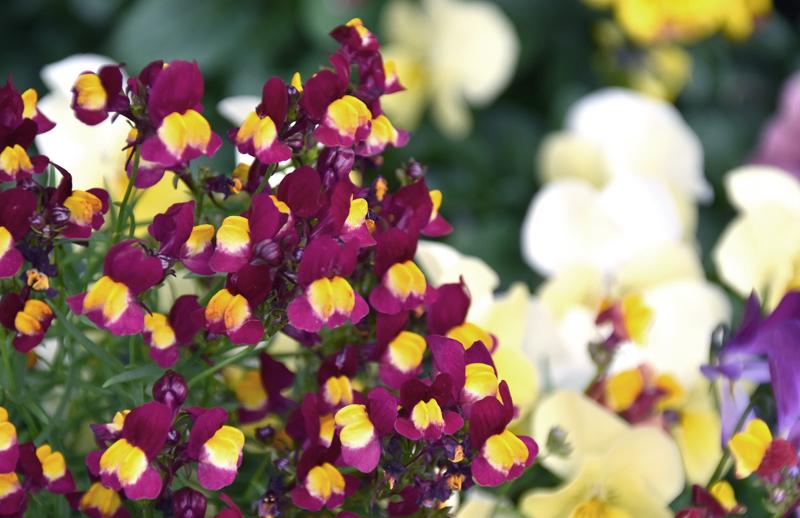 f:id:flowerTDR:20210420083327j:plain