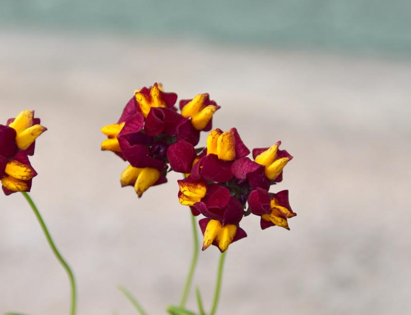 f:id:flowerTDR:20210420083337j:plain