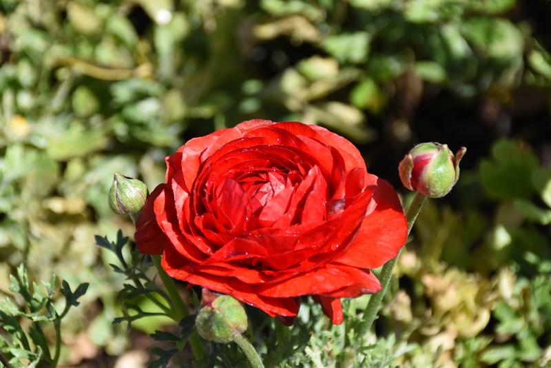 f:id:flowerTDR:20210427055735j:plain