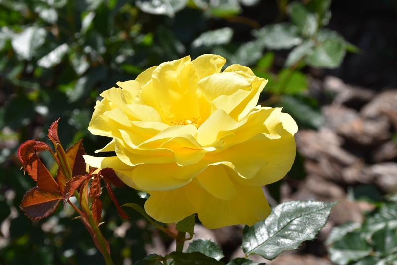 f:id:flowerTDR:20210428233426j:plain
