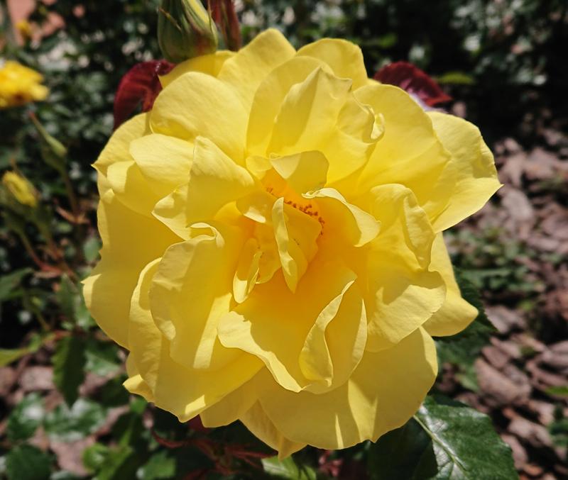 f:id:flowerTDR:20210428233501j:plain