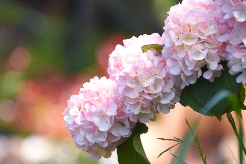f:id:flowerTDR:20210501084301j:plain