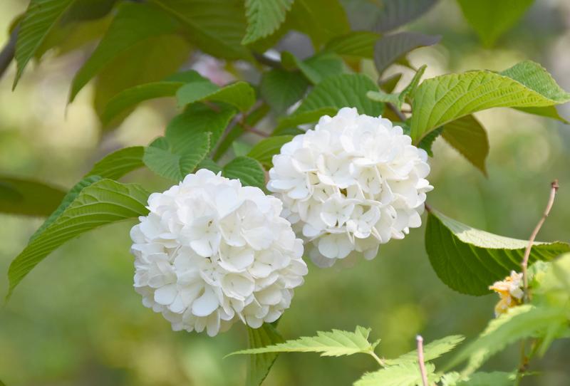 f:id:flowerTDR:20210501084345j:plain