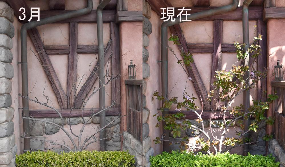 f:id:flowerTDR:20210502141527j:plain