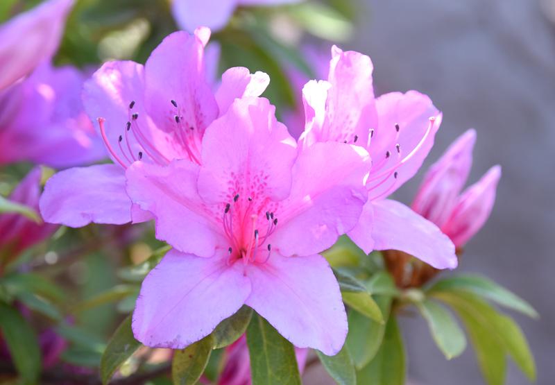 f:id:flowerTDR:20210504070044j:plain