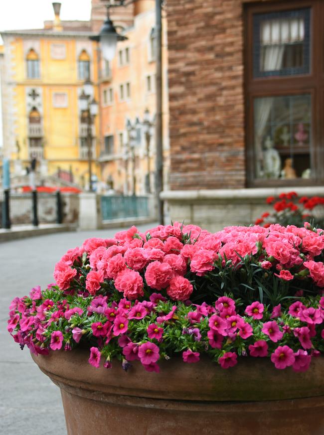 f:id:flowerTDR:20210508093056j:plain
