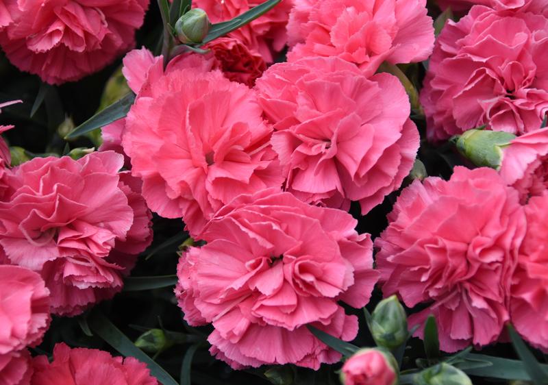 f:id:flowerTDR:20210508093117j:plain