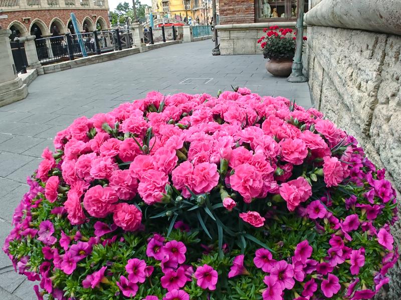 f:id:flowerTDR:20210508093132j:plain