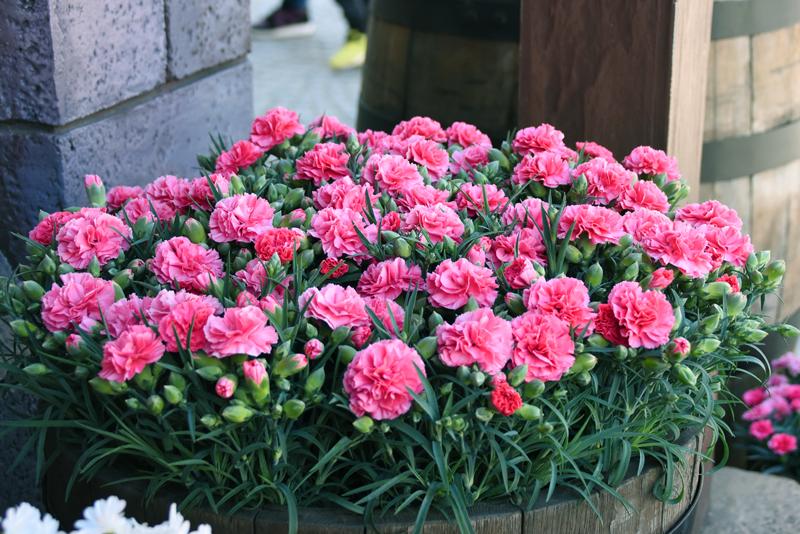 f:id:flowerTDR:20210509085216j:plain