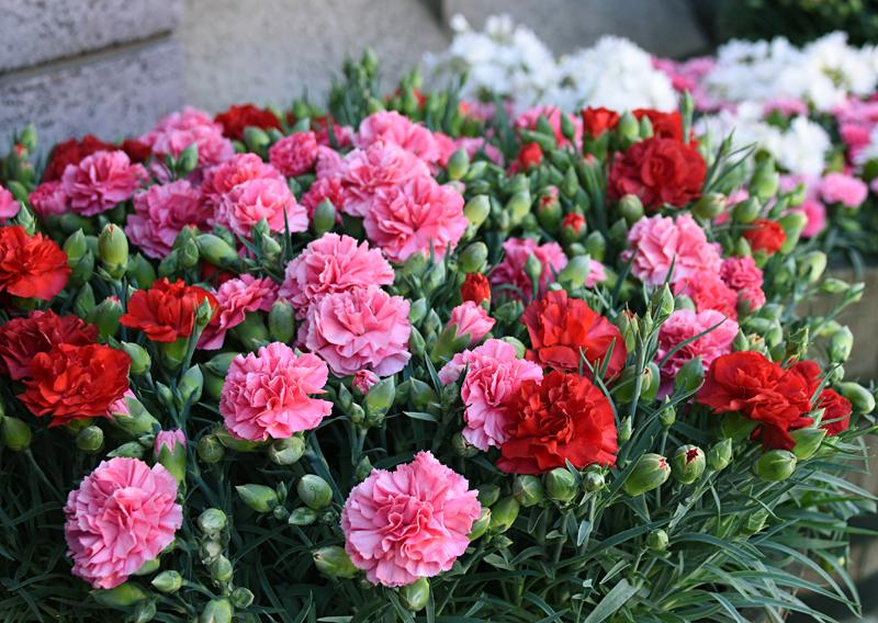 f:id:flowerTDR:20210509085228j:plain