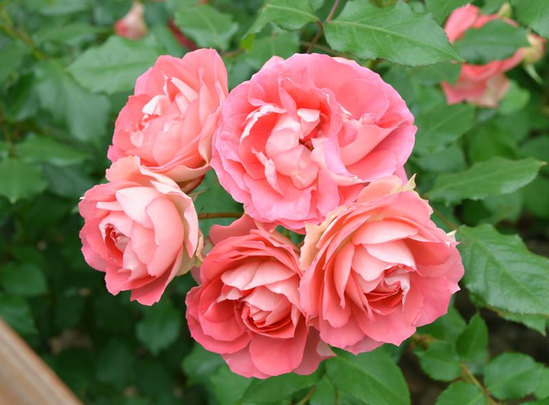 f:id:flowerTDR:20210511210137j:plain