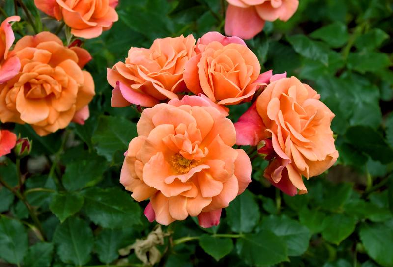 f:id:flowerTDR:20210511210147j:plain