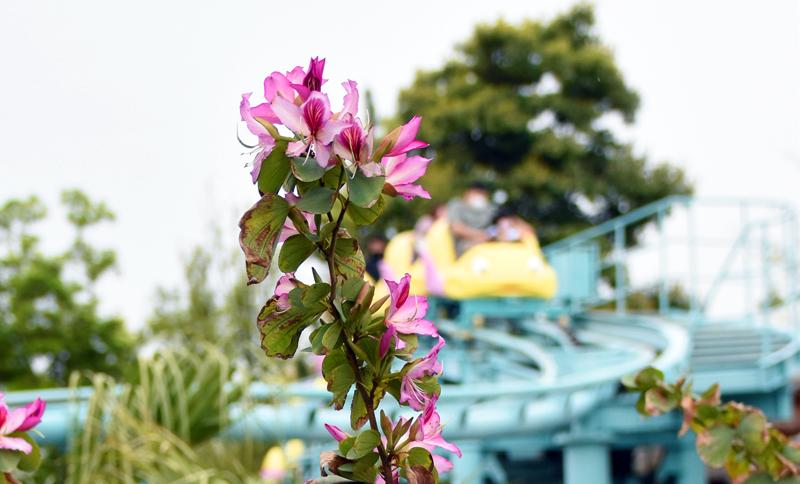 f:id:flowerTDR:20210516082857j:plain