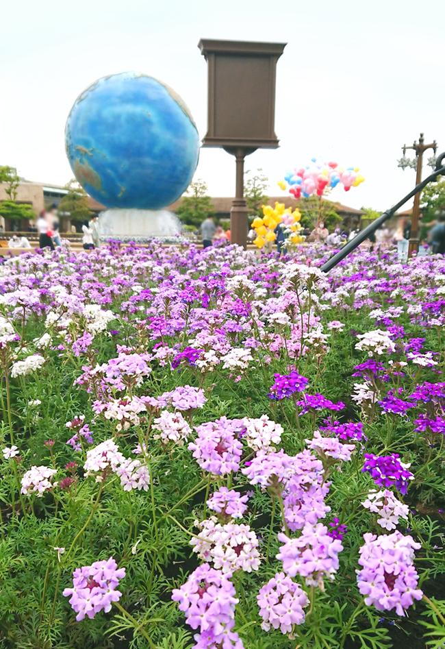 f:id:flowerTDR:20210519083336j:plain