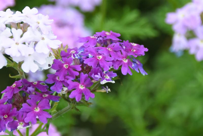 f:id:flowerTDR:20210519083351j:plain