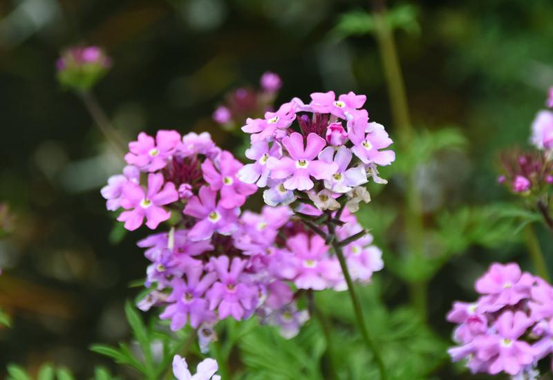 f:id:flowerTDR:20210519083403j:plain