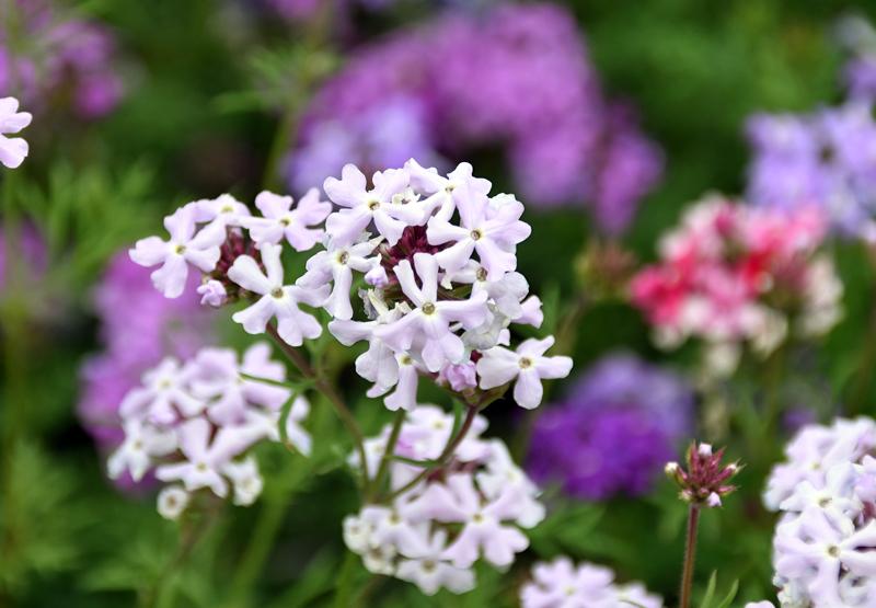 f:id:flowerTDR:20210519083412j:plain