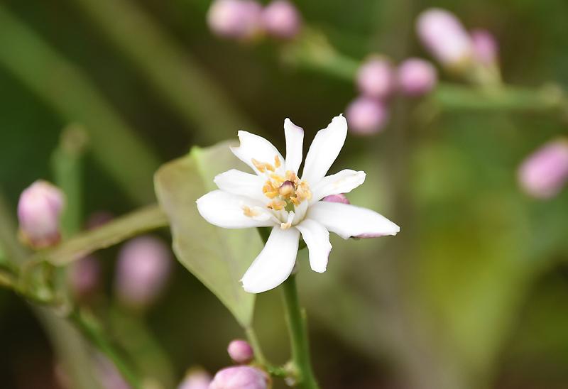 f:id:flowerTDR:20210520082428j:plain