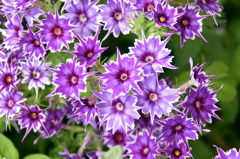 f:id:flowerTDR:20210522225845j:plain