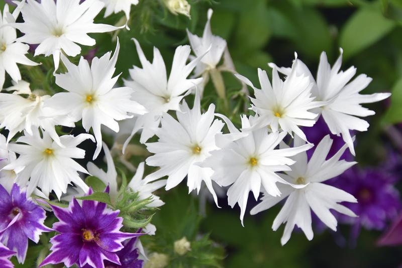 f:id:flowerTDR:20210522225857j:plain