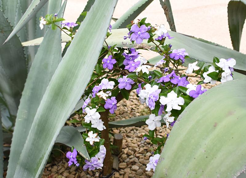 f:id:flowerTDR:20210523230558j:plain