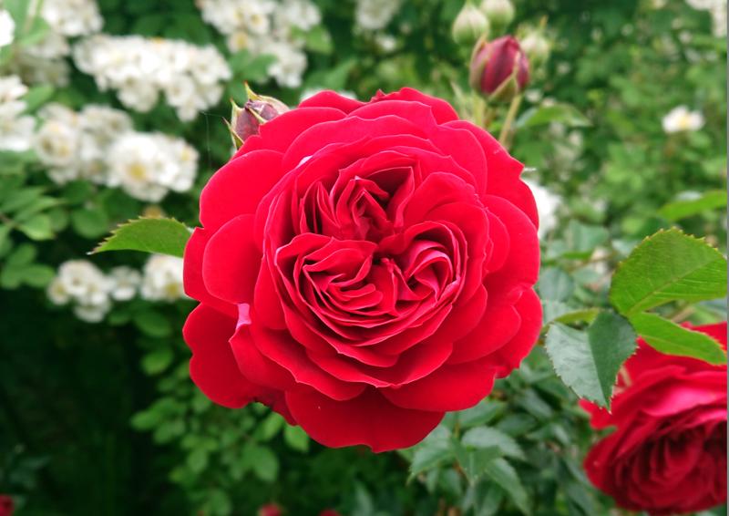 f:id:flowerTDR:20210529080619j:plain
