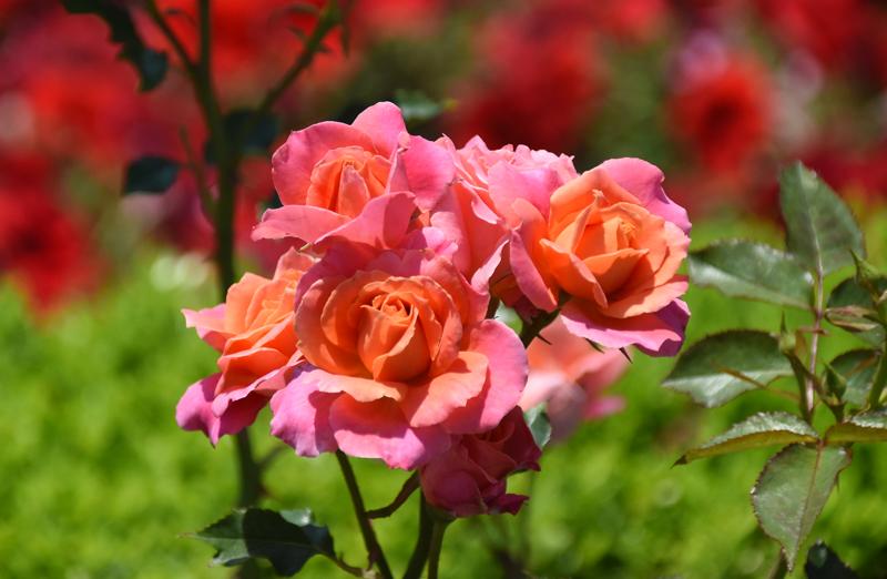 f:id:flowerTDR:20210611083747j:plain