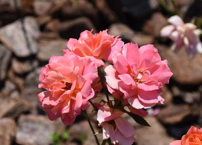 f:id:flowerTDR:20210611083814j:plain