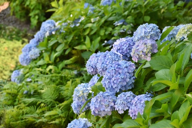 f:id:flowerTDR:20210614091808j:image