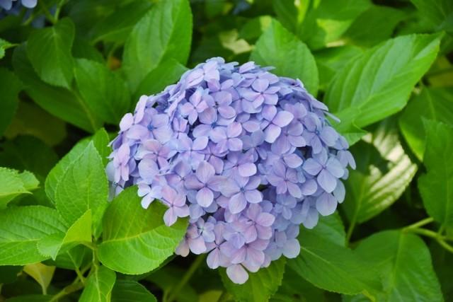 f:id:flowerTDR:20210614091815j:image