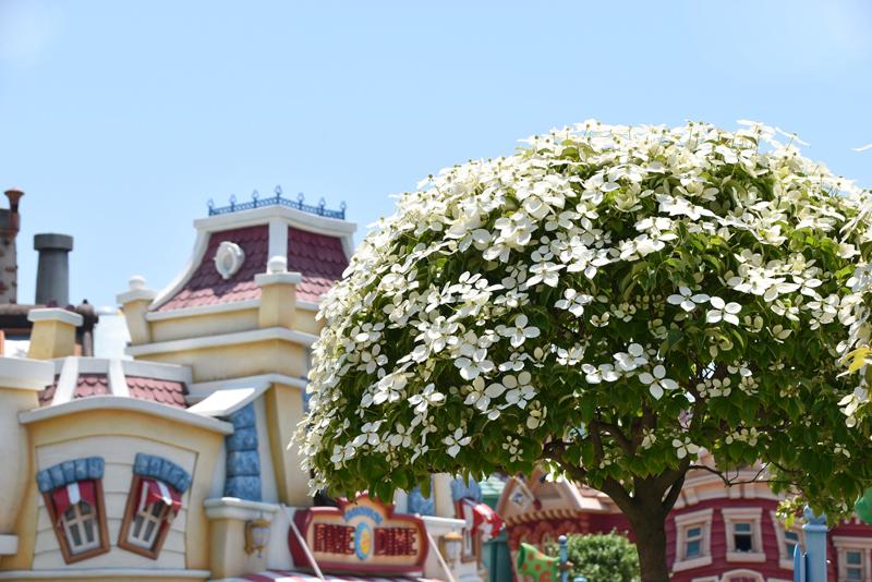 f:id:flowerTDR:20210615083321j:plain