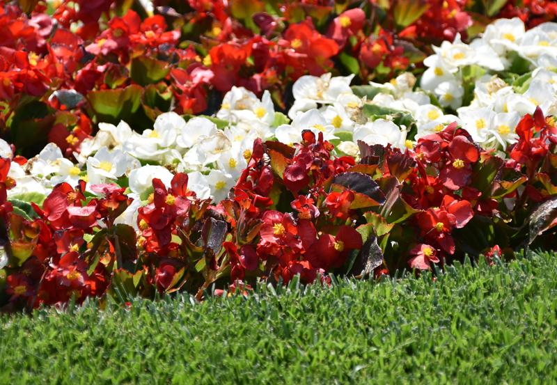 f:id:flowerTDR:20210616082705j:plain