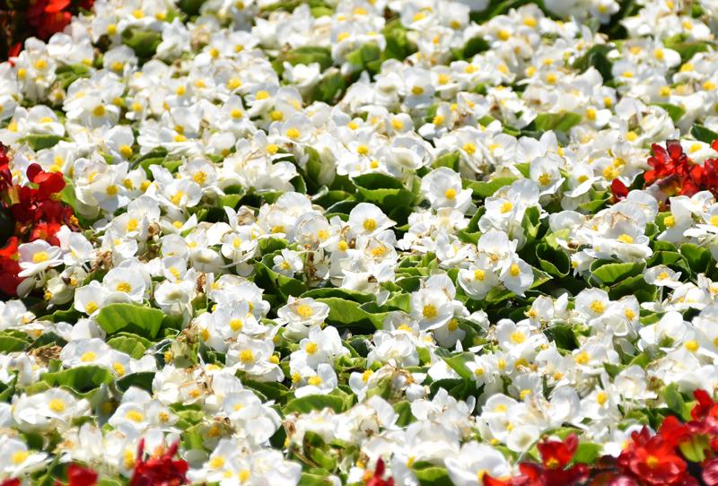 f:id:flowerTDR:20210616082723j:plain